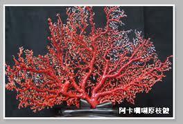 branche entière de corail rouge